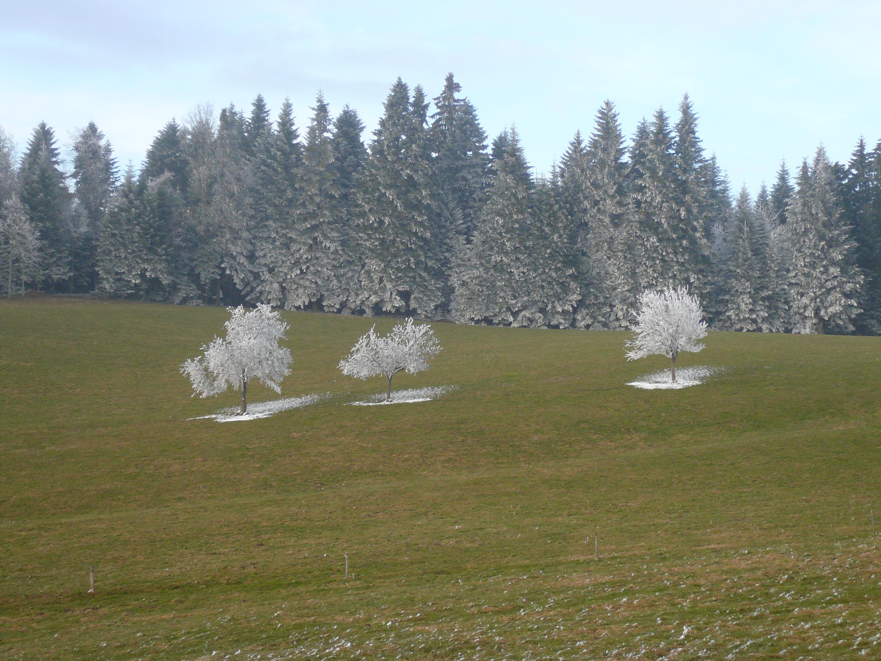 les-trois-arbres-sous-la-neige