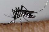 moustique-tigre-site